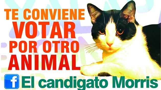 """""""¿Harto de votar a ratas? Vote a un gato: mejor votar por otro animal"""""""