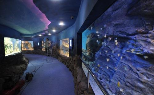Tiburones y anacondas, ahora en el acuario más grande de Moscú