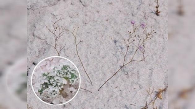 Biólogos hallan la primera planta carnívora que se alimenta bajo tierra