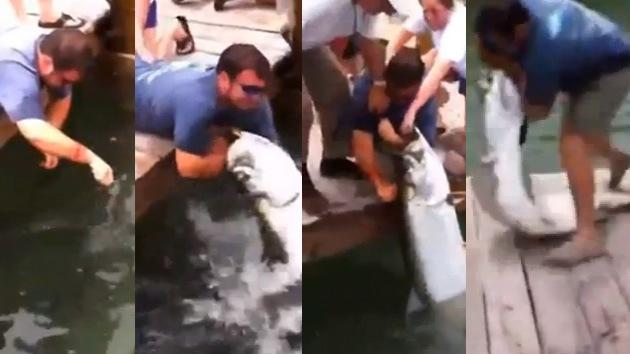 Video: Un enorme pez, a punto de tragarse a un turista