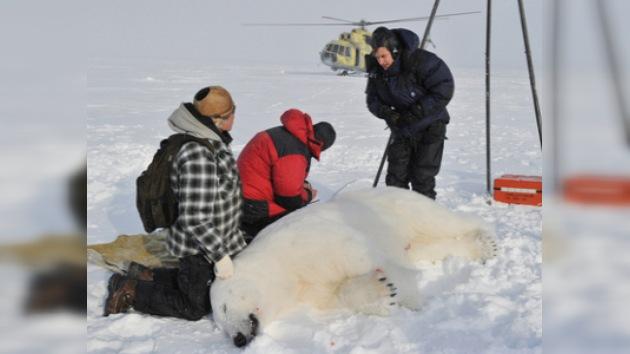 Tecnología punta para salvar al Rey del Ártico