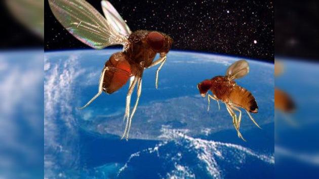 La Progress M -10M lleva moscas al espacio