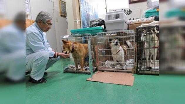 Los japoneses buscan animales en la zona prohibida