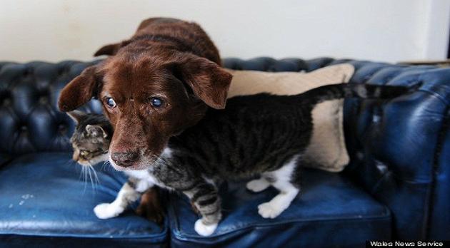 Video: Un gato lazarillo... de un perro ciego
