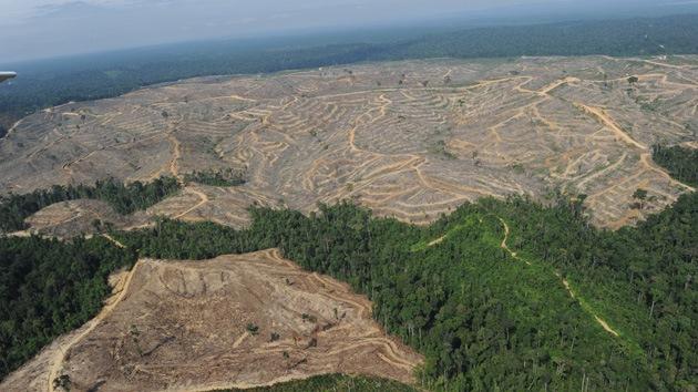 El planeta pierde una superficie similar a la Argentina por la dramática tala de bosques