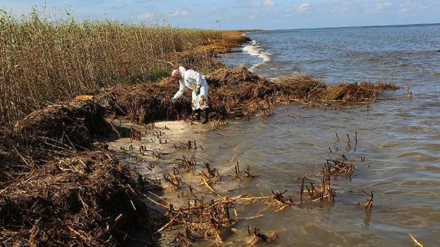 EE.UU., con el alga al cuello: una plaga de sargazos tóxicos devasta ríos y lagos