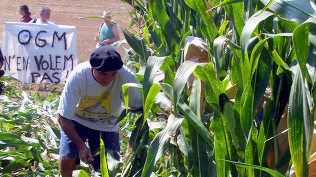 Monsanto y su 'oligarquía de la semilla', de nuevo en tela de juicio