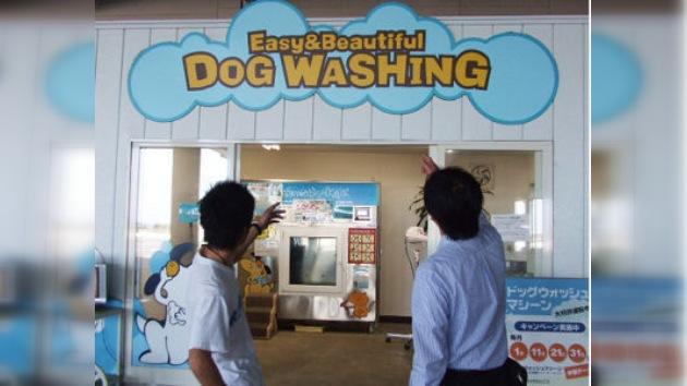 Una lavadora de animales domésticos