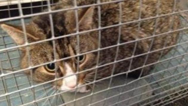 Asunto policial: En Suecia no se salva ni el gato