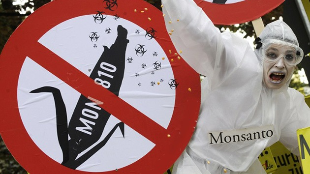 ¿Carta blanca a Monsanto?: El control de cultivos transgénicos en tela de juicio