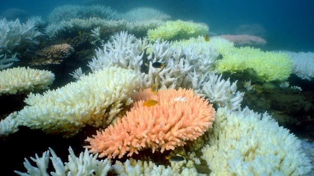 China dice adiós a sus arrecifes de coral