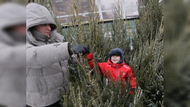 En Moscú se inauguraron los mercados de árboles navideños