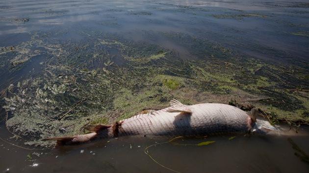 Hallan en el fondo del golfo de México una 'zona muerta' del tamaño de Connecticut