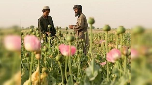 Rusia y EE. UU. lucharán contra las drogas en Afganistán