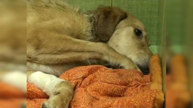 Falleció Bonus, el perro callejero que fue cruelmente torturado