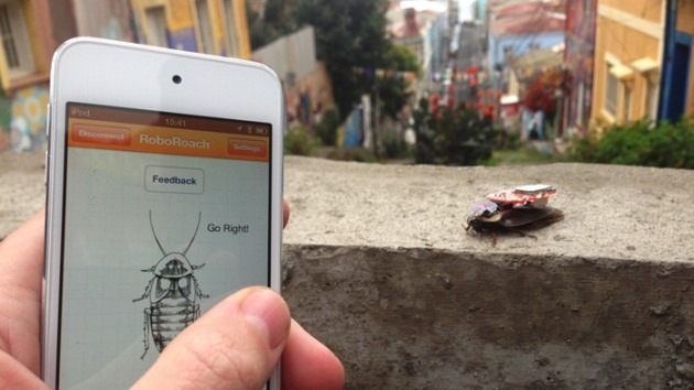 Criatura obediente: crean sistema para teledirigir cucarachas con un iPhone