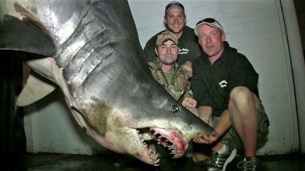 Capturan un tiburón 'monstruo' que podría ser el más grande del mundo