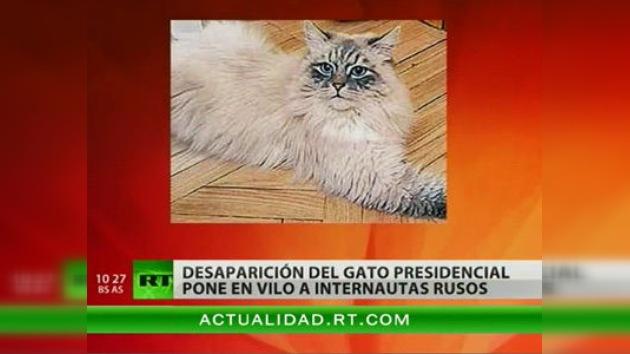 ¿Dónde está el gato del presidente Medvédev?