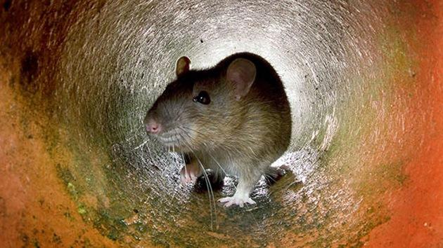 Mate 60 ratas y llévese un teléfono móvil de regalo