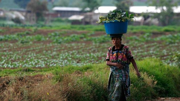 La Justicia de Guatemala suspende la polémica 'ley Monsanto'