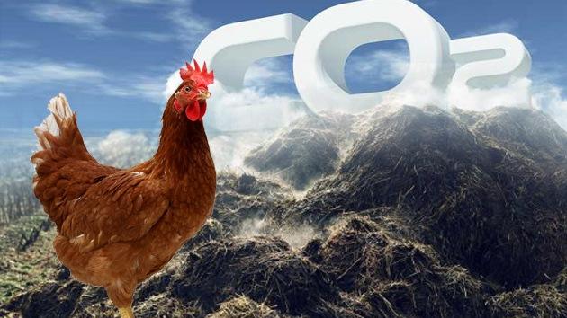 Rusia utilizará una nueva tecnología de extracción de gas del estiércol aviar