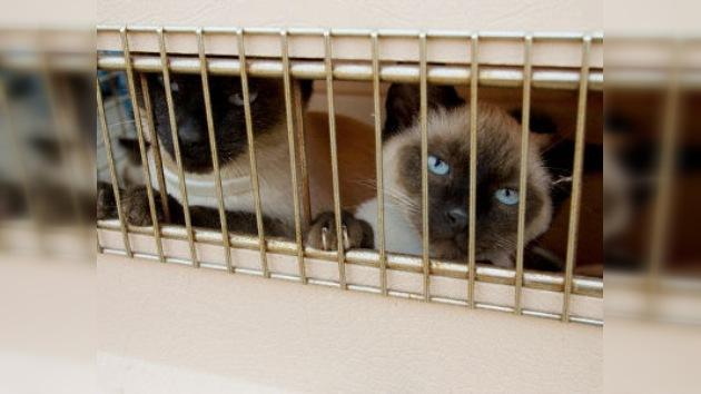 800 gatos no se convertirán en el plato del día gracias a la policía china