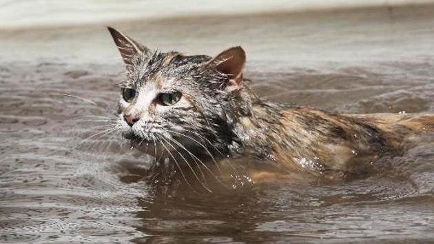 Fotos: Miles de mascotas perdidas buscan a sus dueños tras el paso de Sandy