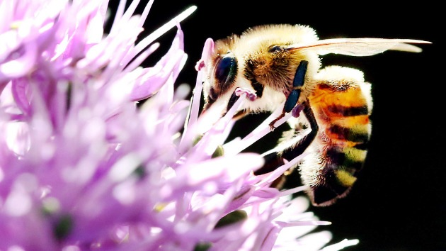 Investigan la muerte de millones de abejas en Gerona