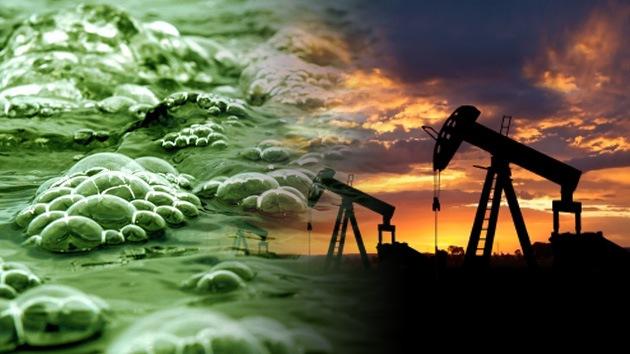 Algas transgénicas de Monsanto, ¿biocombustible o amenaza para el medioambiente?