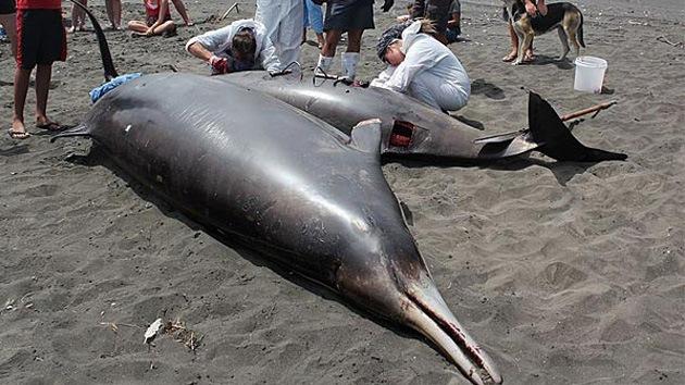 Identifican en Nueva Zelanda a la ballena más extraña del océano