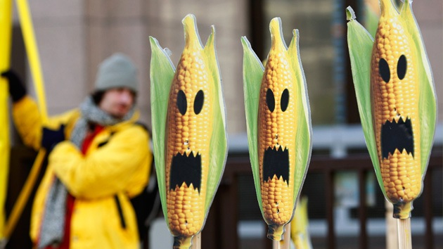 China da la espalda al maíz transgénico de EE.UU.