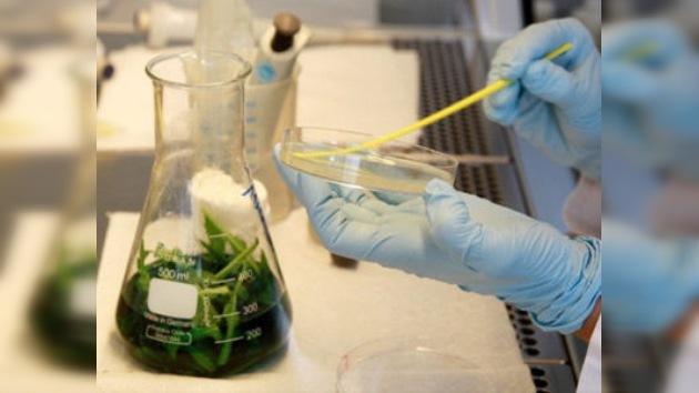 Alemania da por controlado el brote de E.coli