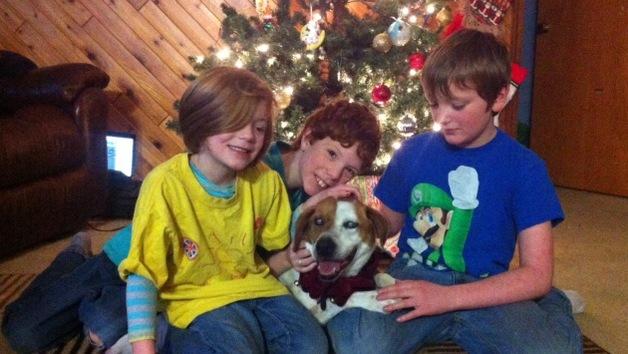 Milagro navideño: una perra ciega perdida en Alaska, vuelve a su hogar