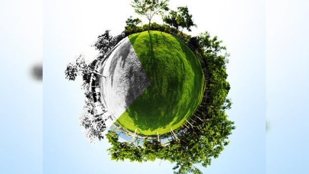 Una quinta parte de las plantas del mundo puede desaparecer