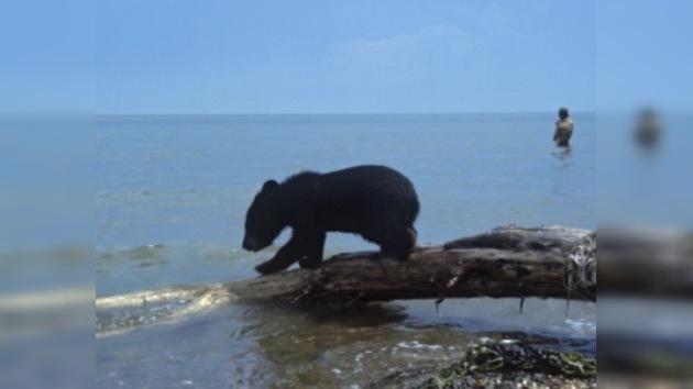 Las lluvias de febrero despertaron a los osos de las Islas Kuriles