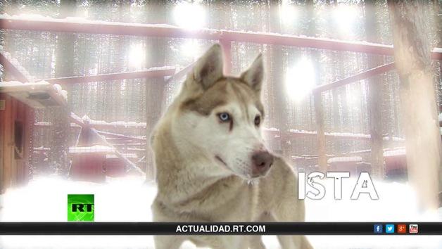 La lista de Erick: Un frío de perros