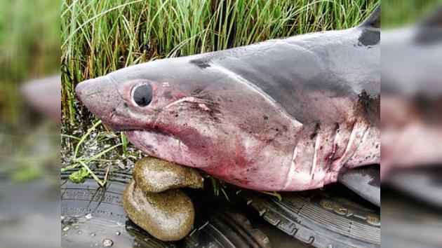 En el Lejano Oriente capturan al presunto 'tiburón asesino'