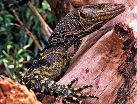 Las más destacadas especies biológicas descubiertas en 2010