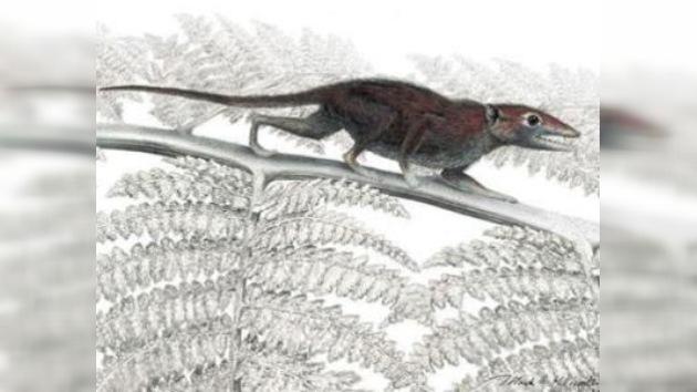 Hallan a la 'tatarabuela' de todos los mamíferos placentarios