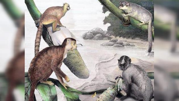 ¿Los antepasados del hombre se originaron en Asia?