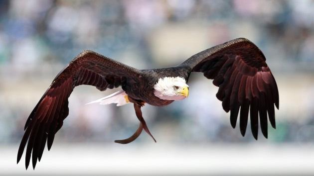 Capturan en el Líbano supuesta 'águila espía' de Israel