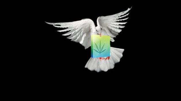 En Colombia detienen a una paloma que transportaba drogas