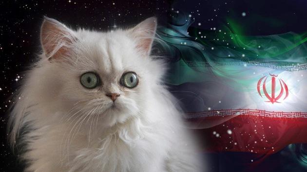 Irán se plantea enviar un gato persa al espacio