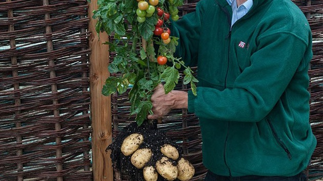 TomTato: un 'monstruo vegetal' sale al mercado