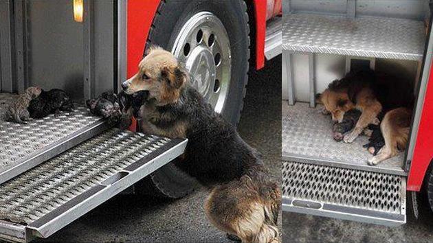Foto: Perra 'heroína' salva a sus cachorros de un incendio