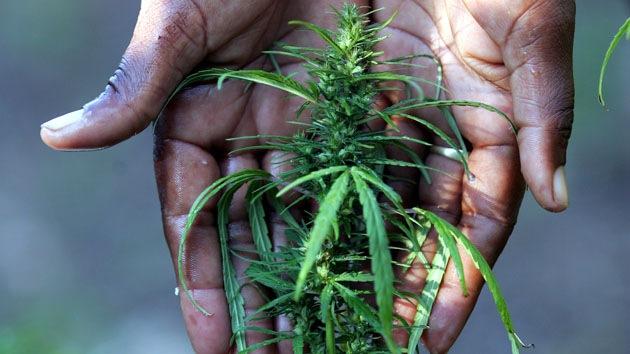 Curación de la nación: cómo sacar provecho económico a la legalización de la marihuana