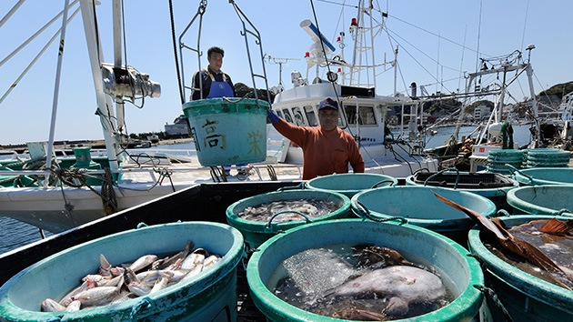 Japón: Capturan un pez con 5.000 veces más radioactividad de lo permitido