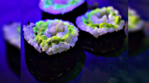 Pescado luminoso, un plato capaz de alumbrar una cena romántica