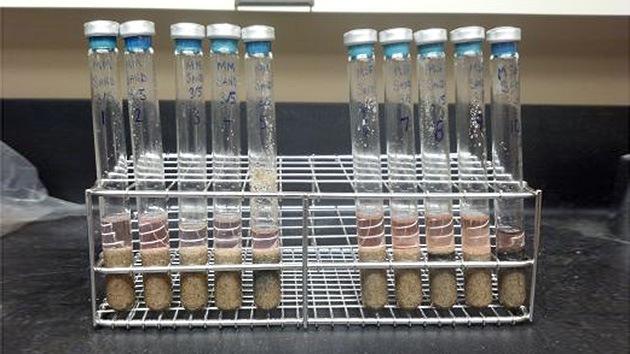 Microorganismos terrestres sobreviven en condiciones marcianas