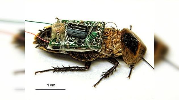 El espionaje acaba cazando moscas: EE. UU. e Israel apuestan por los insectos-drone